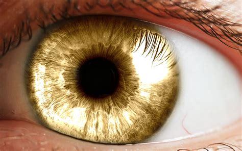 yellow eye color eye s photo odyssey