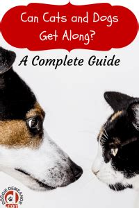 how to cats and dogs to get along cats and dogs living together can they get along doggiedemeanor