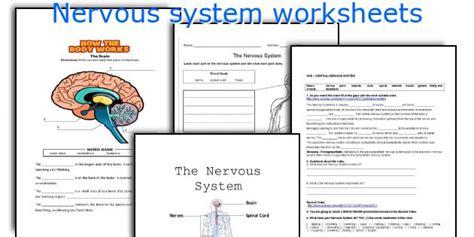 The Nervous System Worksheet by Teaching Worksheets Nervous System