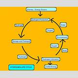 Oxygen And Carbon Dioxide Cycle Simple   690 x 562 png 41kB