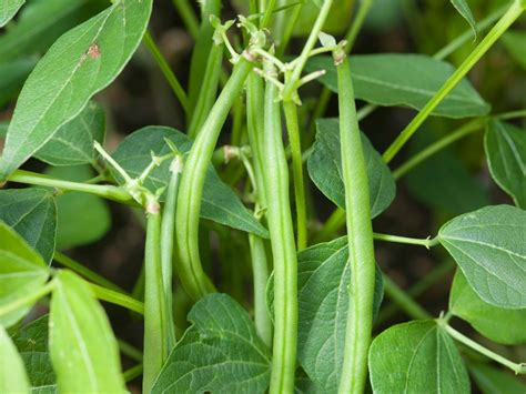 types of vegetables to grow in a garden vegetables you can grow in two months or less hgtv