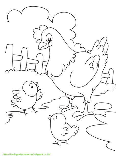 gambar mewarnai ayam  anak paud  tk