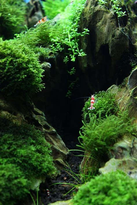 iaplc  ukaps members entries uk aquatic plant society