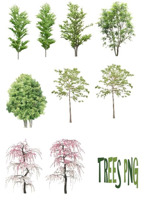 tree architecture drawing 93 best psd resources tree images on
