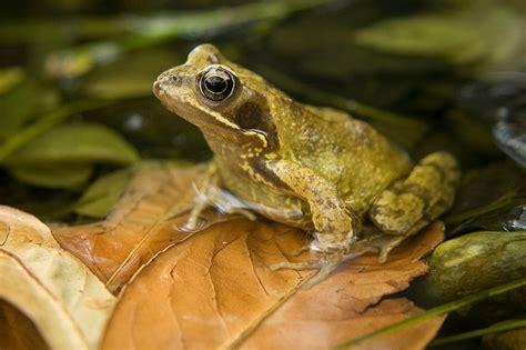 Garage Plans With Loft garden frogs smalltowndjs com