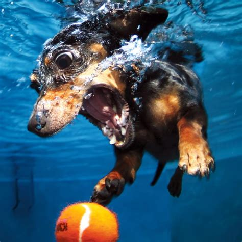 play with puppies nyc underwater dogs hilarious snaps of dogs fetch into water