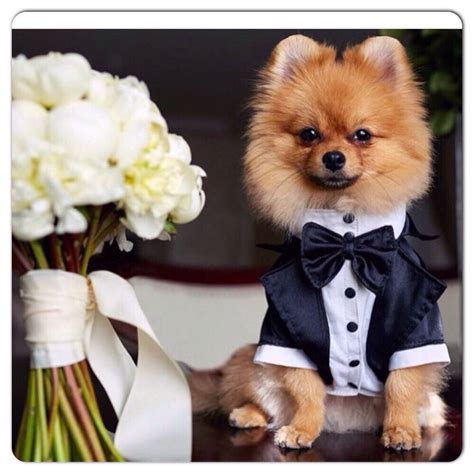 puppy tuxedo wedding tuxedo for dogs formal tuxedo custom made suit