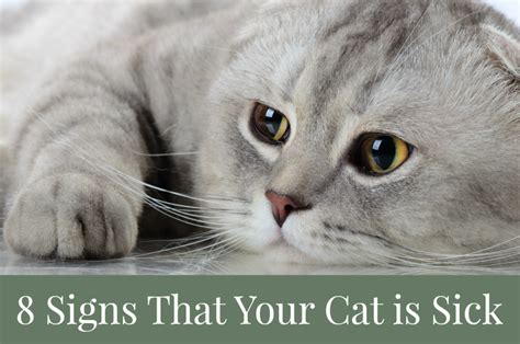 signs your is sick 8 signs that your cat is sick pawsitively pets