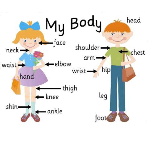 imagenes en ingles de las partes del cuerpo imagenes para colorear de las partes del cuerpo en ingl 233 s
