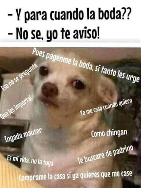 Memes De Chihuahua - 18 veces en las que el meme del perrito reflej 243 tu 2015 a