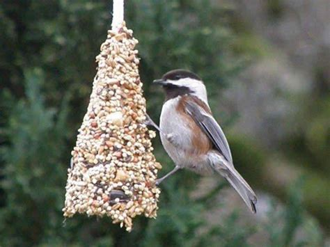 34 incredible diy bird feeders that will fill your garden