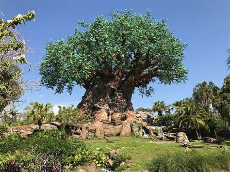 imagenes animal kingdom animal kingdom lugar de inter 233 s en walt disney world