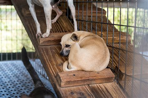 dogs rescued  florida puppy mill    homes aspca