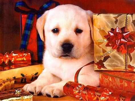cute dogs and puppies wallpapers wallpaper cave christmas dog wallpapers wallpaper cave