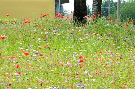 prati fioriti i cittadini apprezzano i quot prati fioriti quot di parabiago