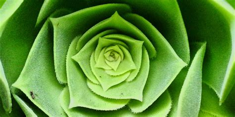facts about green 9 things you didn t know about the color green