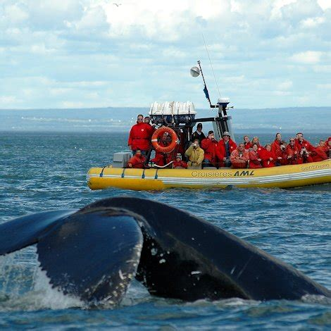 zodiac boat quebec qu 233 bec by the sea whale and wildlife watching