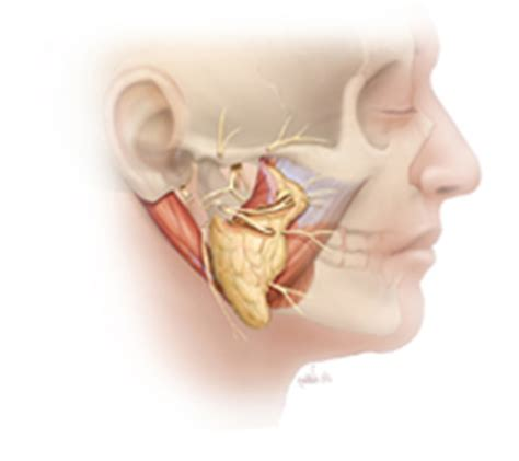 nerve transfer for facial paralysis surgery & functional