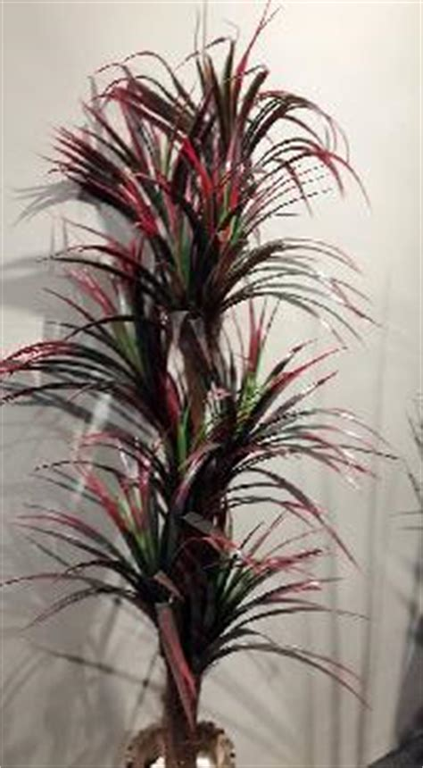 decorative plants with name in india decorative artificial plant manufacturers suppliers
