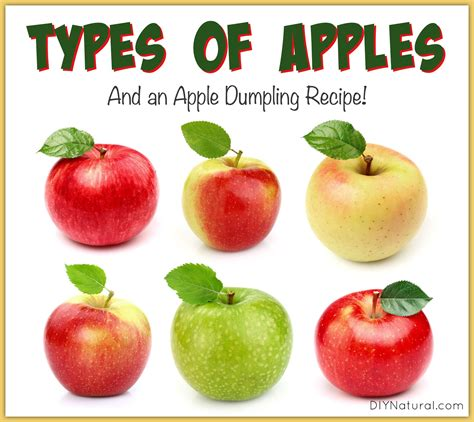 3 fruit types 21 types of apples and an apple dumpling recipe