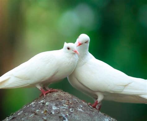 fascinating pair  birds inspiring love