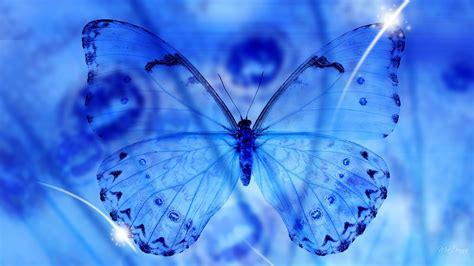 blue butterfly wallpaper hd pixelstalknet