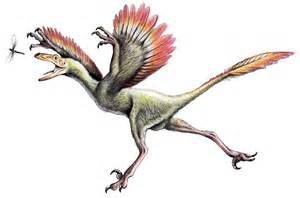 bambiraptor pictures amp facts dinosaur database