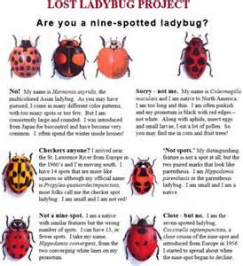 citizen science in the classroom series lost ladybug project