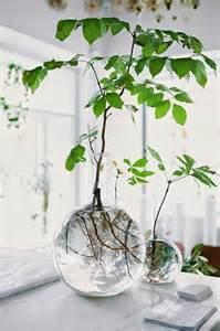Plants That Do Well Indoors ideas para decoraci 243 n con plantas de interior royo blog