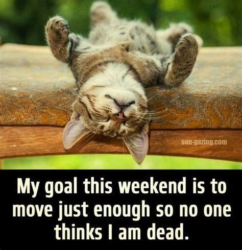 Lazy Day Meme - 17 animal memes only lazy people will understand cuteness