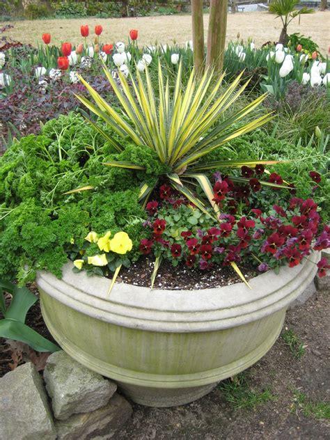 grow yuccas hgtv