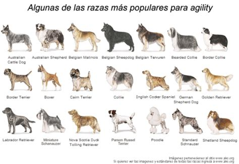 imagenes niños diferentes razas imagen diferentes razas de perros grupos emagister com