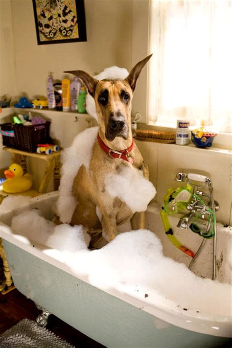 what is dogs in a bathtub mean movie actually marmaduke review