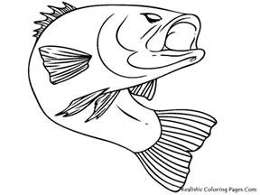 Bass Fish Coloring Pages fish realistic coloring pages realistic coloring pages