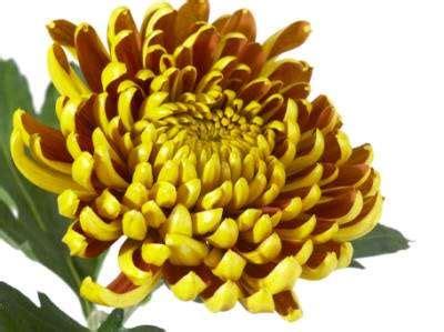 druppel chloor bij bloemen nieuwigheid voor de vaas probeer een nieuw verrassend