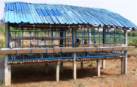 emu housing goat housing modern farming methods