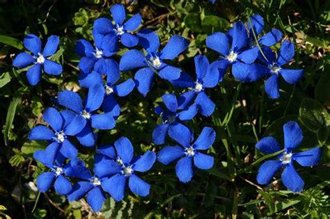 fiori di bach numeri fiori di bach cosa sono propriet 224 e utilizzo