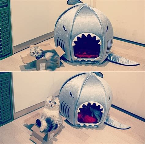 shark bed for dogs shark bed pet love pinterest