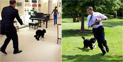 obama dogs barack obama and all his family is a real lover