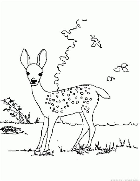 coloring pages animals deer deer coloring pages