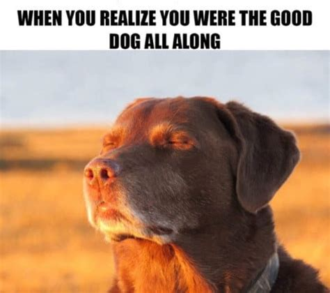dog memes     laughing  hours