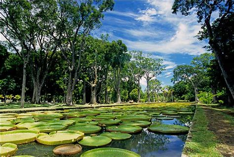 Mauritius Botanical Garden Message In A Bottle Luxury Travel In The Indian