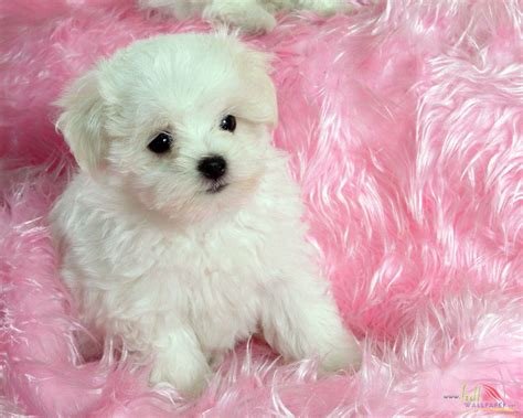 puppy and baby white baby wallpaper 15314
