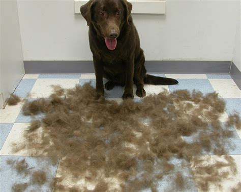 Less Shedding by Furminator Purrfurred Pet Styling