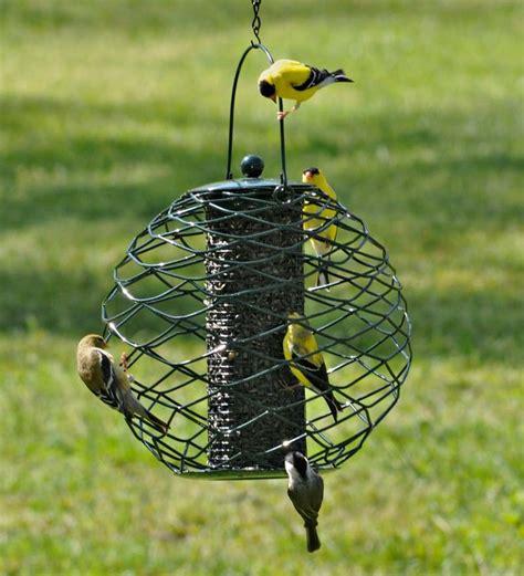Bird Feeder Seeds globe thistle seed bird feeder bird squirrel feeders