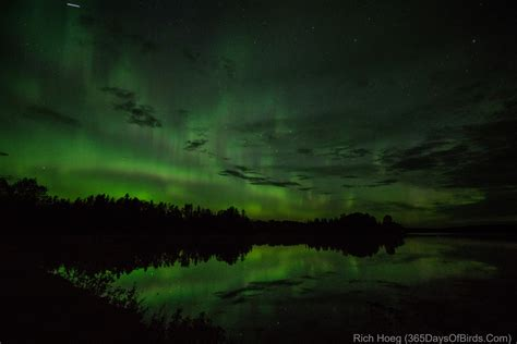 northern lights duluth mn 365 days of birds duluth minnesota based birder