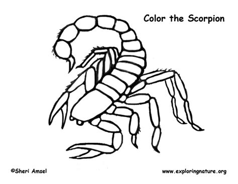 Scorpion Coloring Page Scorpion Printable Coloring Pages by Scorpion Coloring Page