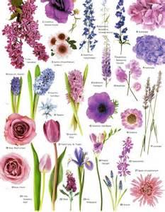 25 best ideas about chrysanthemums on pinterest