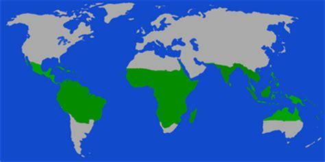 tropisches klima merkmale klimazone tropen