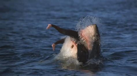 vicious attacks shark attack pictures www imgkid the image kid has it